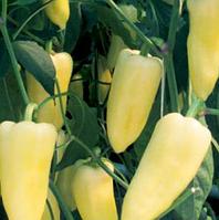 ЦЕНТУРИ F1 - семена перца сладкого, 1 000 семян, Rijk Zwaan, фото 1