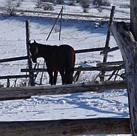 Лошади в аренду