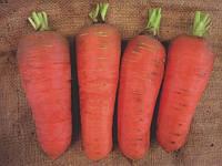 Семена моркови Шамаре,  10 г из профессиональной упаковки , Semo (СЕМО), Чехия