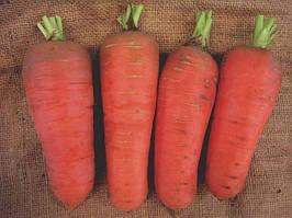 Семена моркови Шамаре,  10 г из проф. упаковки, Semo (СЕМО), Чехия