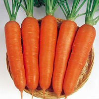 ВИКТОРИЯ F1 - семена моркови, Seminis