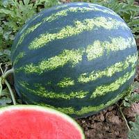 БОНТА F1 - насіння кавуна, Seminis