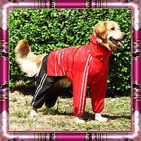 Дождевик-Трансформер для собак средних и крупных пород. Одежда для собак.