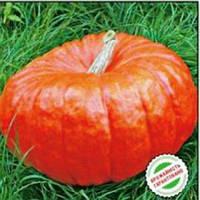 Семена Тыквы Руж Виф д'Этамп 10 сем. 8 грамм  Tezier (Франция) Обработанные  , фото 1