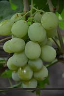Виноград Смарагд