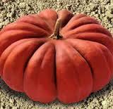 Семена Тыквы Мускат де Прованс 10 сем. Clause (Франция) Обработанные