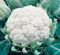 БАЛБОА F1 - насіння капусти цвітної 2 500 насіння, Bejo Zaden, фото 1
