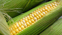 Кукурузы в Бразилии будет больше