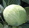 РИЕКШЕН F1 - насіння капусти білоголової, 2 500 насіння, Bejo Zaden
