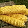 ТРОФИ F1  - семена кукурузы суперсладкой, 5 000 семян , Semenis