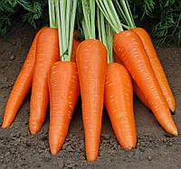 АБЛІКСО F1 - насіння моркви Шантане, 200 000 насінин, Semenis, фото 1