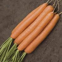 КАРБОЛИ F1 - семена моркови Нантес, 200 000 семян, Semenis