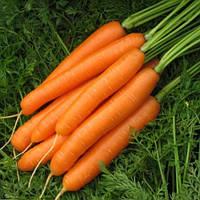 КАРВЕДЖО F1 - семена моркови Нантес, 200 000 семян, Semenis, фото 1