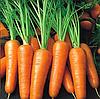РОЯЛ ШАНСОН - семена моркови Шантане, 100 грамм, Semenis