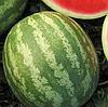 КОЛИЗЕЙ F1 - семена арбуза тип Кримсон Свит, 1000 семян, Semenis