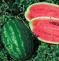 МЕЛАНИЯ F1 - семена арбуза тип Кримсон Свит, 1000 семян, Semenis