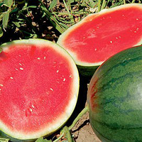 ФЕНВЭЙ F1 - семена арбуза бессемянного, 1000 семян, Semenis, фото 1