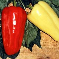 ДЖИПСИ F1  - семена перца сладкого, 500 семян, Semenis