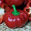 ПРИТАВИТ F1 - семена перца сладкого, 500 семян, Semenis