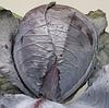 ЛЕКТРО F1 - семена капусты краснокочанной, 2 500 семян, Bejo Zaden