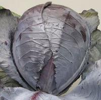ЛЕКТРО F1 - семена капусты краснокочанной, 2 500 семян, Bejo Zaden, фото 1