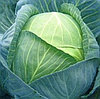 ЛЕННОКС F1 - семена капусты белокочанной, 2 500 семян, Bejo Zaden