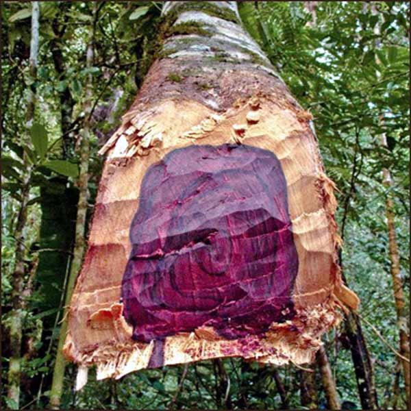 древесина розового дерева