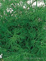 Семена укропа Аллигатор 100 гр
