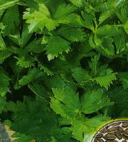 Семена сельдерея листового Нежного 10 гр