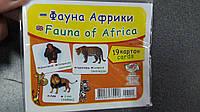 Эдельвейс Карточки обучающие/фауна африки