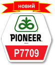 Семена кукурузы Пионер П7709, Pioneer P7709