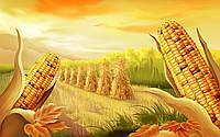 Семена кукурузы Пионер П8025, Pioneer P8025