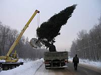 Посадка высоких деревьев (крупномеров) Харьков