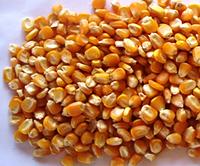 Кукуруза Полтава