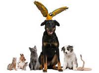 Як вибрати домашню тварину за знаком Зодіаку