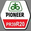 Семена кукурузы Пионер ПР39Р20, Pioneer PR39R20