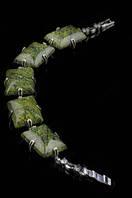 Браслет из змеевика, браслеты из натурального камня, купить на сайте http://ladystyle.biz/