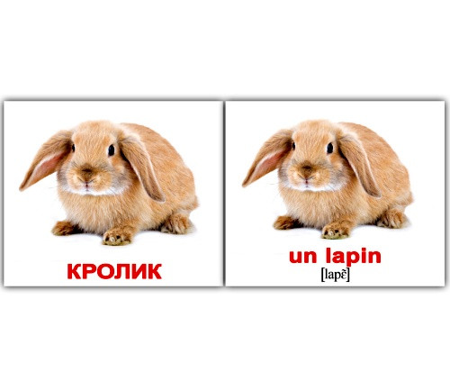 "Карточки мини русско-французские ""Домашние животные/Les animaux domest, 230 карт, 095801"