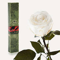 Долгосвежая роза FLORICH в подарочной упаковке  - БЕЛЫЙ БРИЛЛИАНТ (5 карат на коротком стебле)