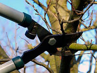 Обрезка и формирование кроны плодовых деревьев