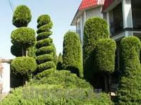 Стрижка и обрезка декоративных растений Харьков