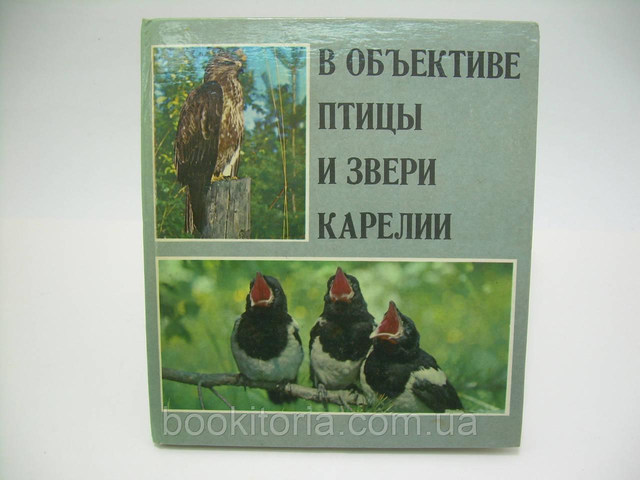 В объективе птицы и звери Карелии : Фотоальбом (б/у).