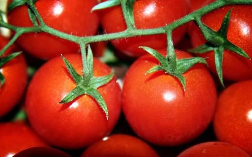 Добрива для помідор