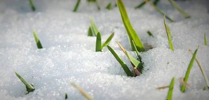Основные правила грамотного ухода за газоном зимой