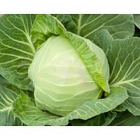 Семена гибрида капусты Кевин F1 ранней-предназначенной для употребления в свежем виде, салатов