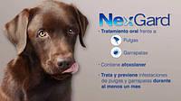 Merial NexGard - жевательная таблетка для защиты собак от клещей и блох
