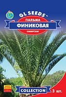 Семена  Пальма финиковая Канарская комнатная