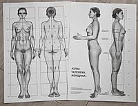 Анатомический атлас - Женщина или Мужчина (на выбор) - Естественные пропорции