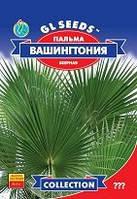 Семена  Пальма веерная Вашингтония робуста комнатная