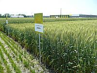 Микроудобрение для ячменя, пшеницы Минералис, фото 1